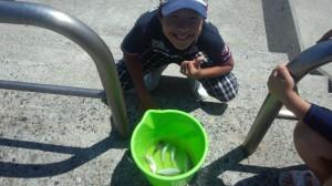小っちゃい。。。 鯛の赤ちゃんに興奮してる息子。。。