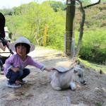 恐る恐る子ヤギを触る様子。