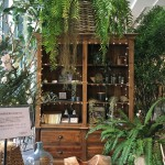 蔦屋家電内に入っている植物店入り口のディスプレイ。勉強になります。