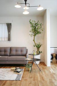 高知市一宮にあるオシャレな植物店ならくくあさん。大きさや種類も豊富です。