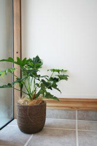 高知市一宮のくくあさんはオシャレな植物をたくさん取り扱っています。