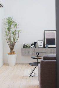 高知市一宮にあるオシャレな植物店「くくあ」さんの植物は、シンプルスタイルのお家にも相性抜群です。