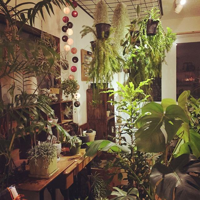 高知市一宮にあるオシャレな植物店のくくあさんです。