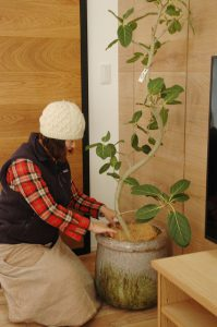 高知市で多肉や観葉植物などのオシャレな植物をお探しの方は、一宮のくくあさんまでお越しください。