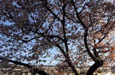高知市福井町にあるタイセイホーム。家を建てたいけどどの工務店がいいかわからない。タイセイホームでは月に1度内覧会を開催しております。気になる方はご来場お待ちしております。